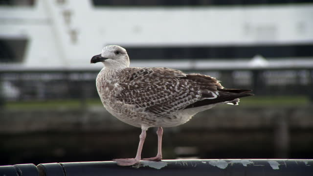 Close up shot of a gull perched on a dingy metal rail near new york city during the day