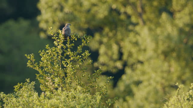 close up shot of a hawksitting atop a tree - treetop stock videos & royalty-free footage