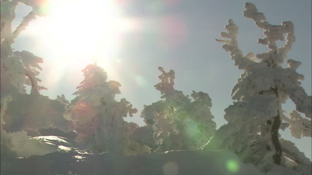 close up shot of a rime-coated tree at zao - light natural phenomenon stock videos & royalty-free footage