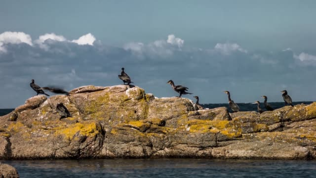 Close up shot of birds on a rock near the ocean