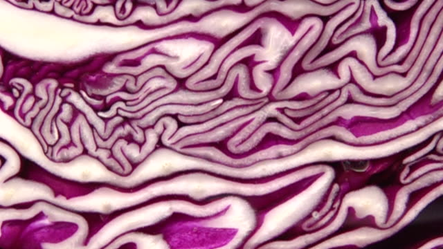 Close up shot of cabbage in the water