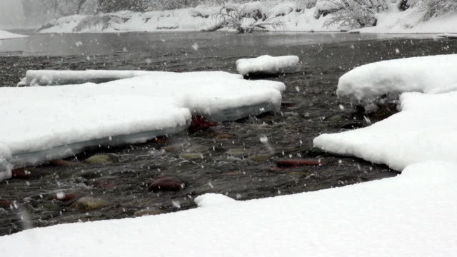 close up shot of colored rocks in river with snow covered banks during heavy puffy snowfall. - glacier national park us stock videos and b-roll footage