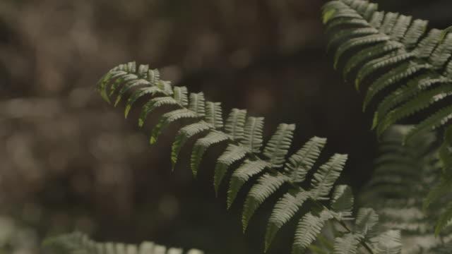 close up shot of fern leafs - fern stock videos & royalty-free footage