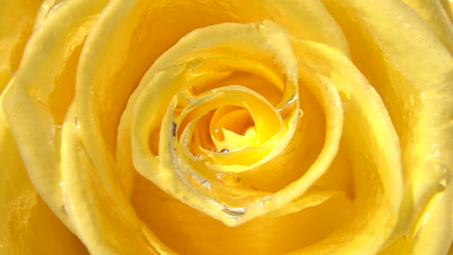 close up shot of flower - single flower stock videos & royalty-free footage