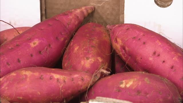 close up shot of fresh red sweet potatoes - sweet potato stock videos & royalty-free footage