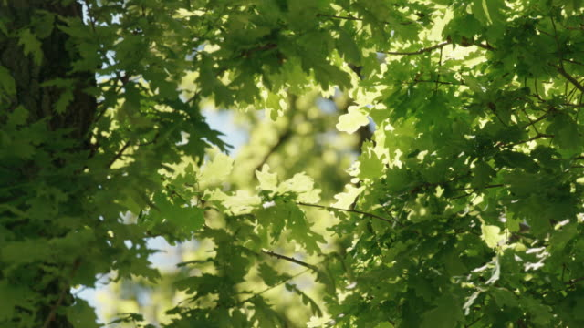 close up shot of green tree leaves in german nature preserve - leaf stock videos & royalty-free footage