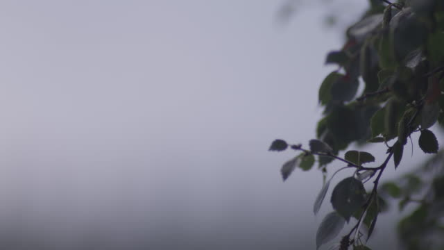 close up shot of leafs blowing in the wind - fragility stock videos & royalty-free footage