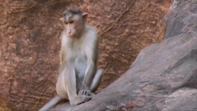 close up shot of monkey - 一匹点の映像素材/bロール