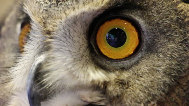 close up shot of owl - one animal stock-videos und b-roll-filmmaterial