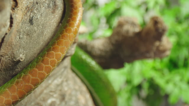 slo mo close up shot of the scale of a green snake - scaly stock videos & royalty-free footage