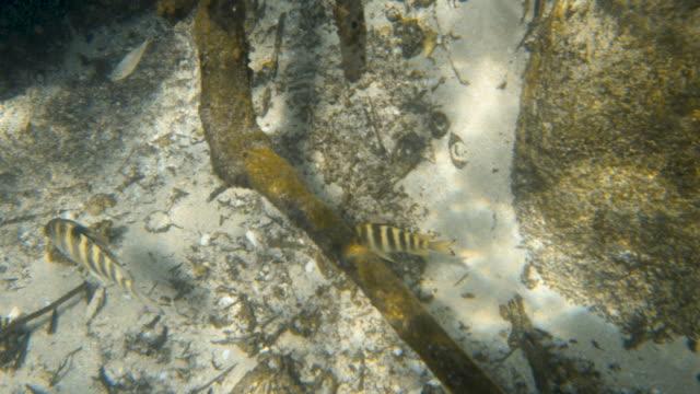 vídeos de stock e filmes b-roll de close up shot of two fish on the seafloor - sargaço
