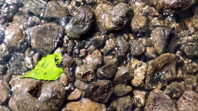 close up shot of water stream on the shallow river - kiselsten bildbanksvideor och videomaterial från bakom kulisserna