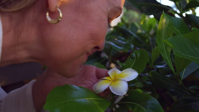 close up shot of woman bending down to smell flower - turtle bay hawaii stock videos and b-roll footage
