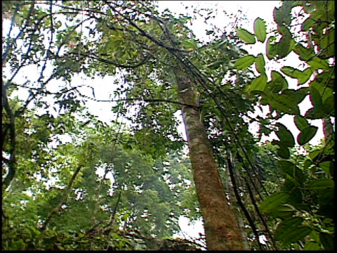 close up shots of a man cutting down a tree in the amazon rainforest - roraima state stock videos and b-roll footage