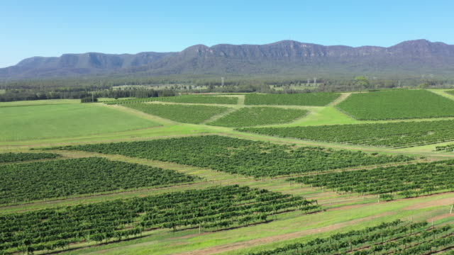 close up shots of grapevines with drone along with high wide angles shot from various locations in hunter valley nsw wine country - wine stock videos & royalty-free footage