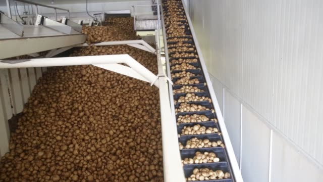 close up shots of potatoes being unloaded at the kettle foods inc manufacturing facility in salem oregon to be turned into potato chips close up... - セーラム点の映像素材/bロール