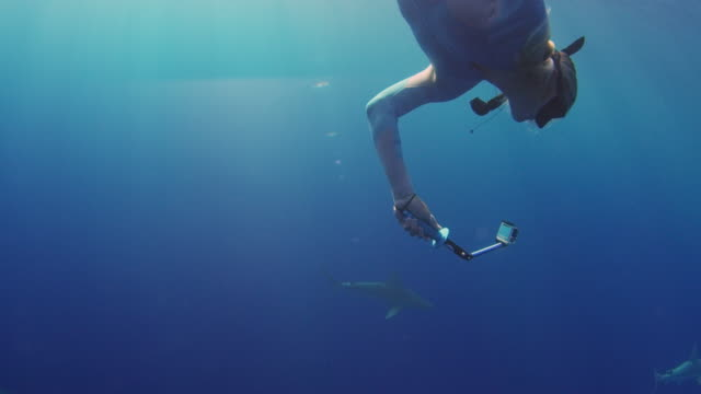 close up side view of a girl diving into a school of sharks - turtle bay hawaii stock videos and b-roll footage