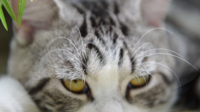 close up sleepy cute cat, slow shot - cat blinking stock videos & royalty-free footage