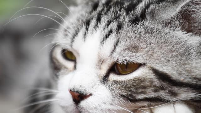 close up sleepy cute cat - cat blinking stock videos & royalty-free footage