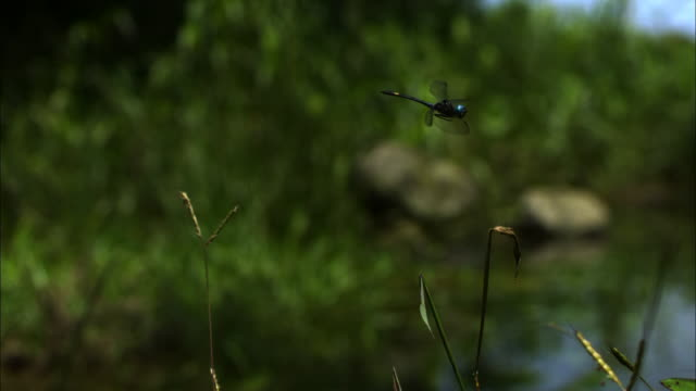 close up, slow motion; dragonfly flying near plants - invertebrate stock videos & royalty-free footage