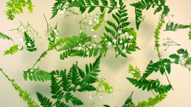 close up slow motion leatherleaf and gypsophila floating in air - botany stock videos & royalty-free footage