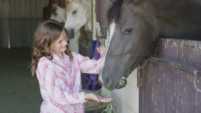 vídeos de stock, filmes e b-roll de close up slow motion panning shot of girl feeding and petting horse in stable / lehi, utah, united states - lehi