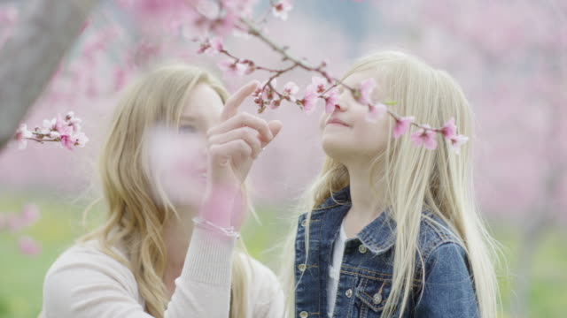 close up slow motion panning shot of mother and daughter smelling flowers in park / alpine, utah, united states - frische stock-videos und b-roll-filmmaterial