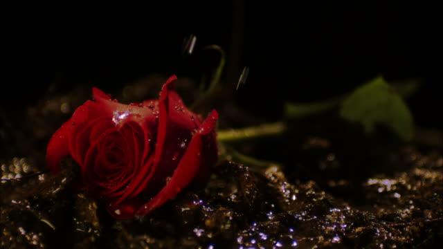 close up, slow motion; rain falling on single rose  - single rose stock videos & royalty-free footage