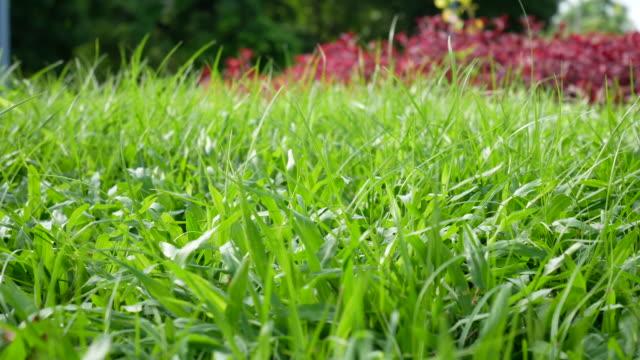 vidéos et rushes de fermez-vous vers le haut de petit bogue dans l'herbe verte à l'extérieur. - pelouse