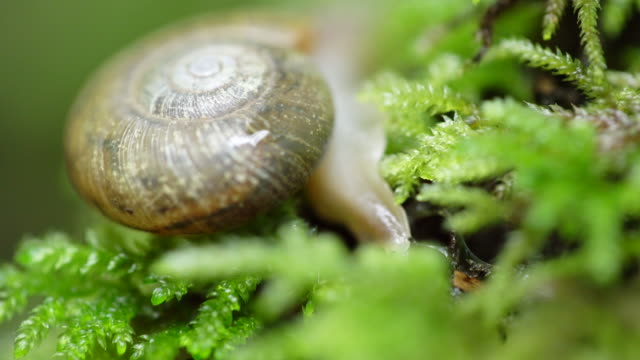 Close up, snail hides in plants