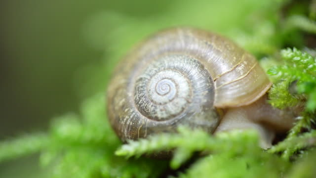 Close up snail moves on forest floor