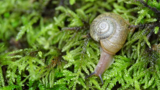 Close up, snail on forest floor
