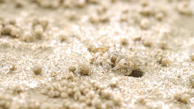 nahaufnahme der soldat krabben am strand - krabbe stock-videos und b-roll-filmmaterial