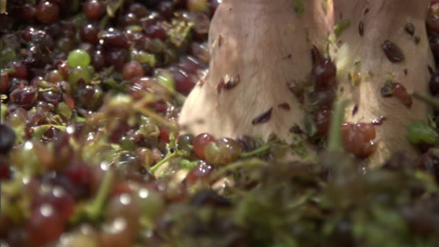 Close Up steadicam - Feet stomp red and green grapes. / Greece