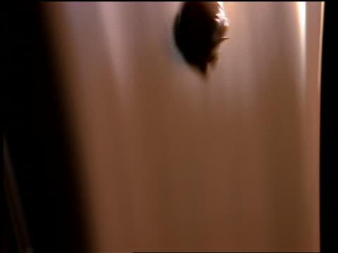 close up strawberry being thrown thru pouring chocolate milk - chocolate milk stock videos & royalty-free footage