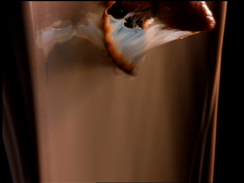 close up strawberry being thrown thru wall of pouring chocolate milk - chocolate milk stock videos & royalty-free footage
