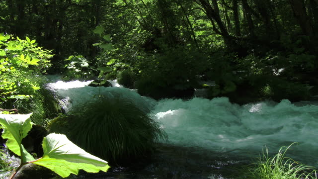 close up strong water stream and green forrest in dolly motion
