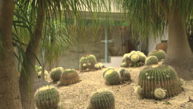 close up suburban cacti garden couple walk past sandstone house wall in background - sandstone stock videos & royalty-free footage