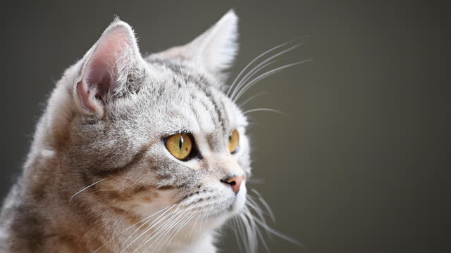 close up tabby cute cat with yellow eyes - cat blinking stock videos & royalty-free footage