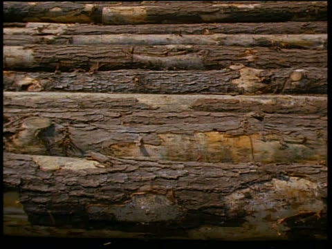 close up tilt down log falling from pile to conveyor belt - lumberyard stock videos and b-roll footage