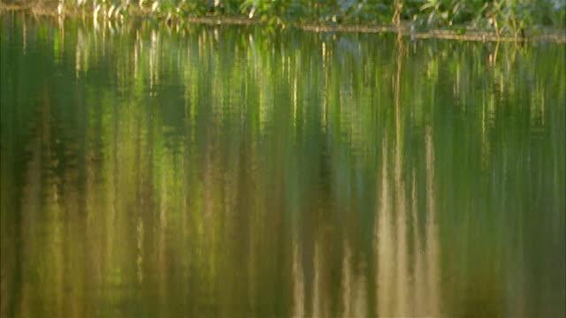 vídeos y material grabado en eventos de stock de close up tilt up from trees reflected off surface of river to spanish moss hanging from tree - musgo español