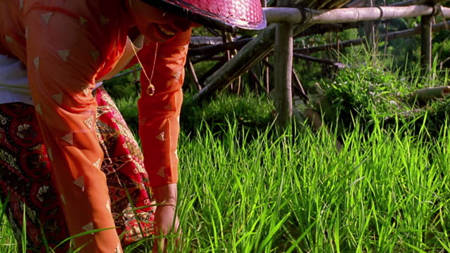 close up tilt up woman bending in field to pick plant with man next to water wheel in background / sumatra, indonesia - indonesian ethnicity stock videos & royalty-free footage