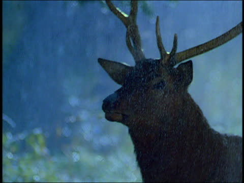 close up tracking shot male deer in snowy forest at night - hirsch stock-videos und b-roll-filmmaterial