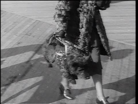 vídeos y material grabado en eventos de stock de b/w 1937 close up tracking shot woman carrying terrier dog by luggage strap on back / newsreel - invento