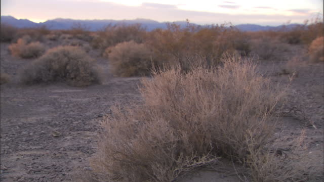 close up tracking,left , sagebrush covers a desert bordered by distant mountains. / california - セージブラッシュ点の映像素材/bロール