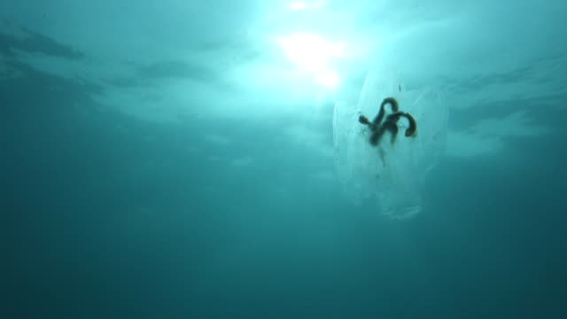 close up: translucent jellyfish floating close to sunny water surface - translucent stock videos & royalty-free footage