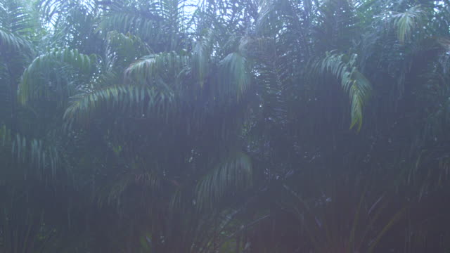 vídeos de stock e filmes b-roll de close up tropical rainstorm in the jungle against the backdrop of a green forest with a palm tree - monção