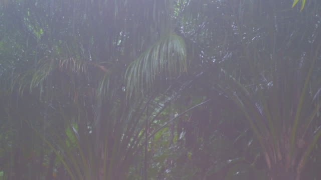 close up tropical rainstorm in the jungle against the backdrop of a green forest with a palm tree - monsoon stock videos and b-roll footage