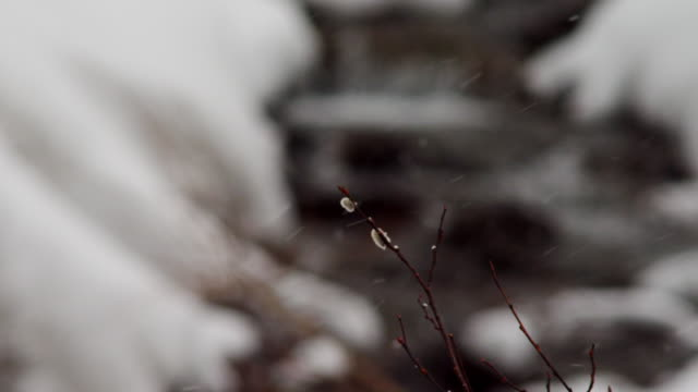 close up, twig blows in breeze during snowfall - twig stock videos & royalty-free footage