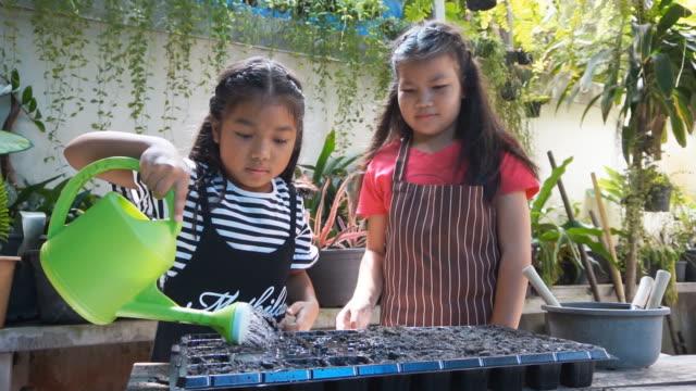 vídeos de stock e filmes b-roll de slo mo close up two girls planting vegetables at the home - colocar planta em vaso